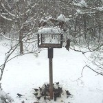 birdfeeder in snow
