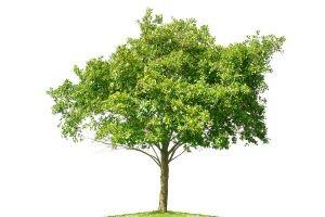 tree1[1]