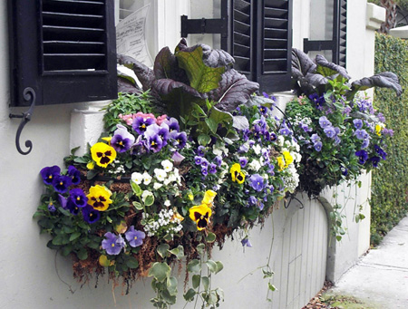 The Joys Of Container Gardening Town And Country Gardens