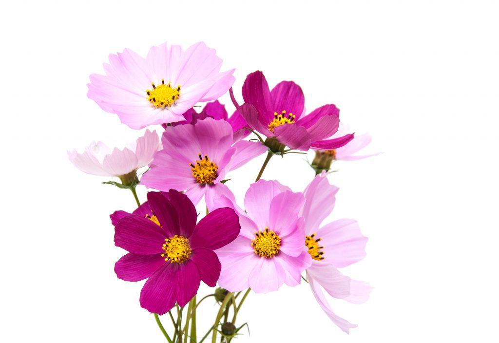 Plantar flores para sus abejas - maniquíes