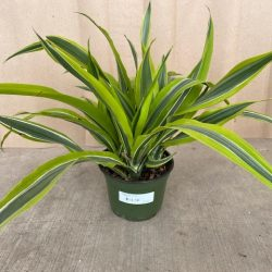 Houseplants- Tropical and Flowering